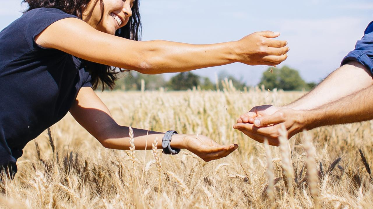 person pouring wheat into another person's hands