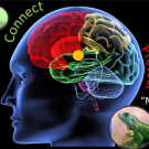 Connect, Protect Brain image
