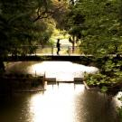 single person walking across bridge over arboretum waterway.